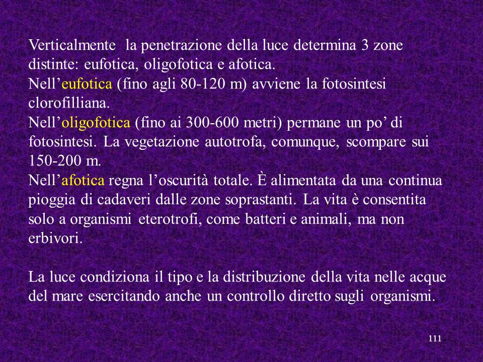 Verticalmente la penetrazione della luce determina 3 zone distinte: eufotica, oligofotica e afotica.
