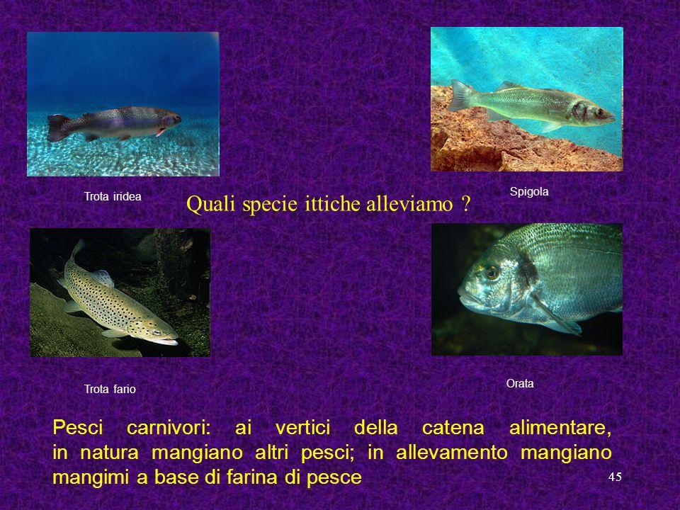 Quali specie ittiche alleviamo