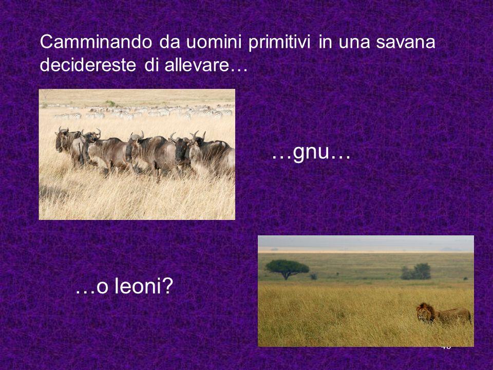 Camminando da uomini primitivi in una savana decidereste di allevare…