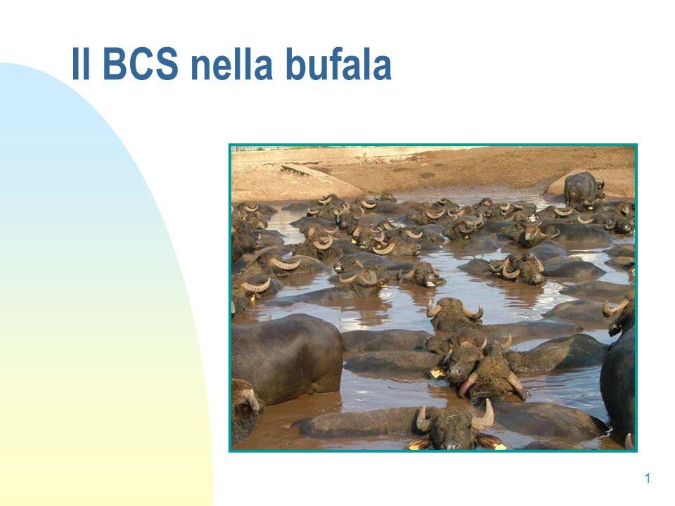 Il BCS nella bufala 1