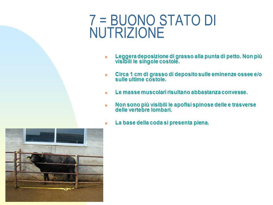 7 = BUONO STATO DI NUTRIZIONE