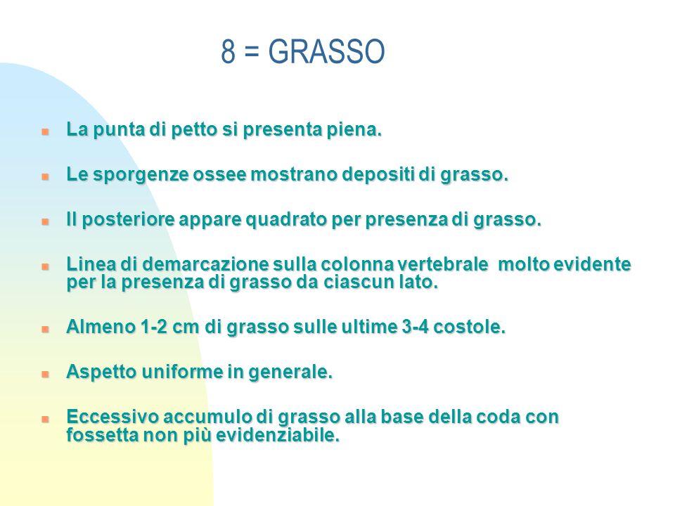 8 = GRASSO La punta di petto si presenta piena.