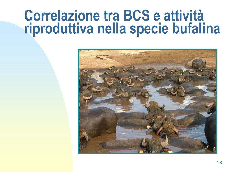 Correlazione tra BCS e attività riproduttiva nella specie bufalina