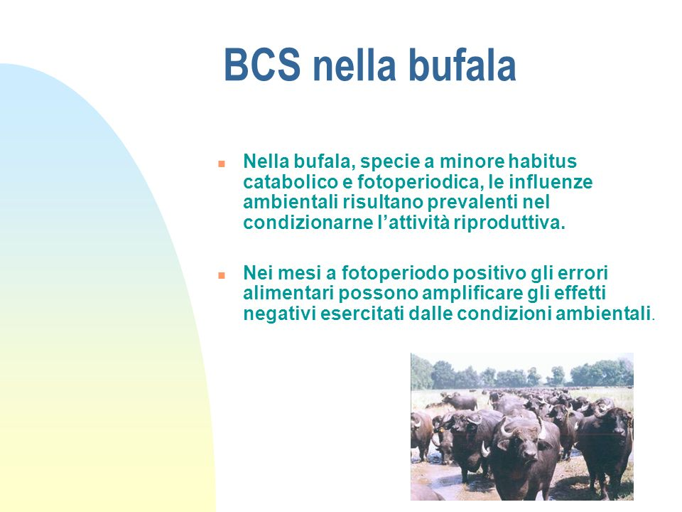 BCS nella bufala