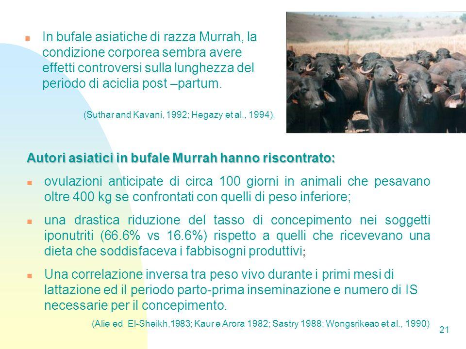 Autori asiatici in bufale Murrah hanno riscontrato: