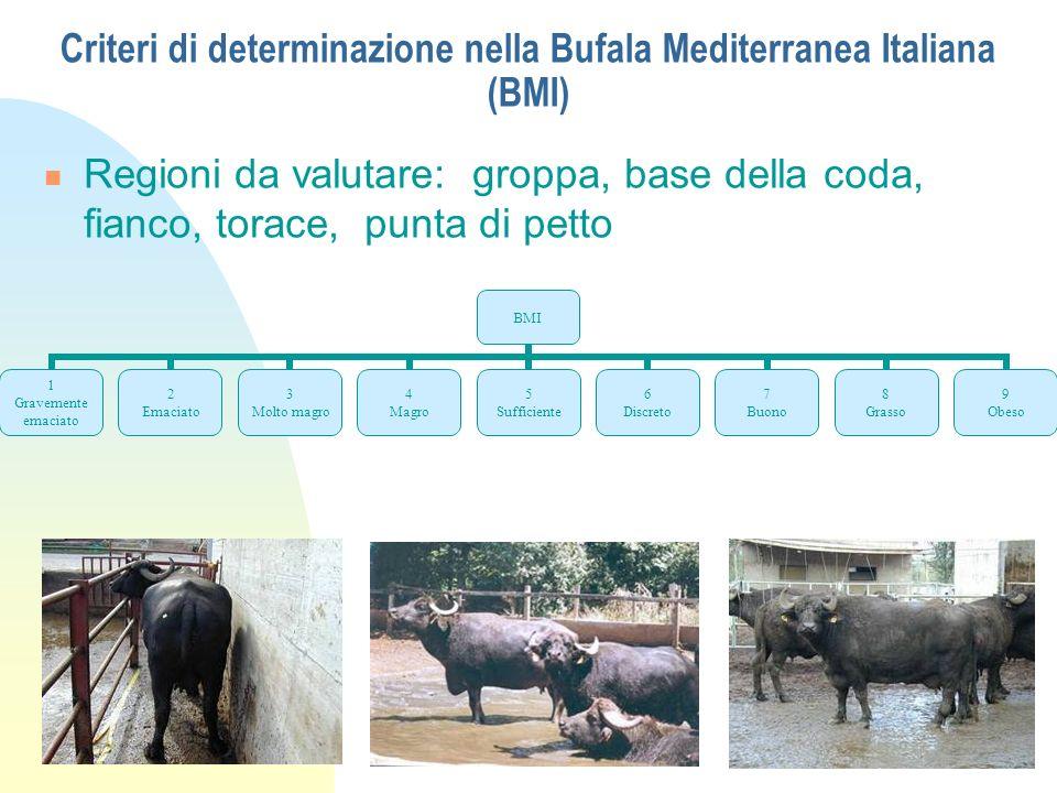 Criteri di determinazione nella Bufala Mediterranea Italiana (BMI)