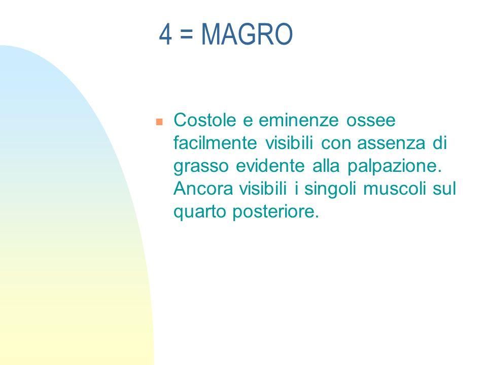 4 = MAGRO