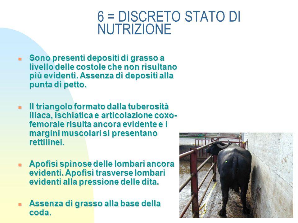 6 = DISCRETO STATO DI NUTRIZIONE