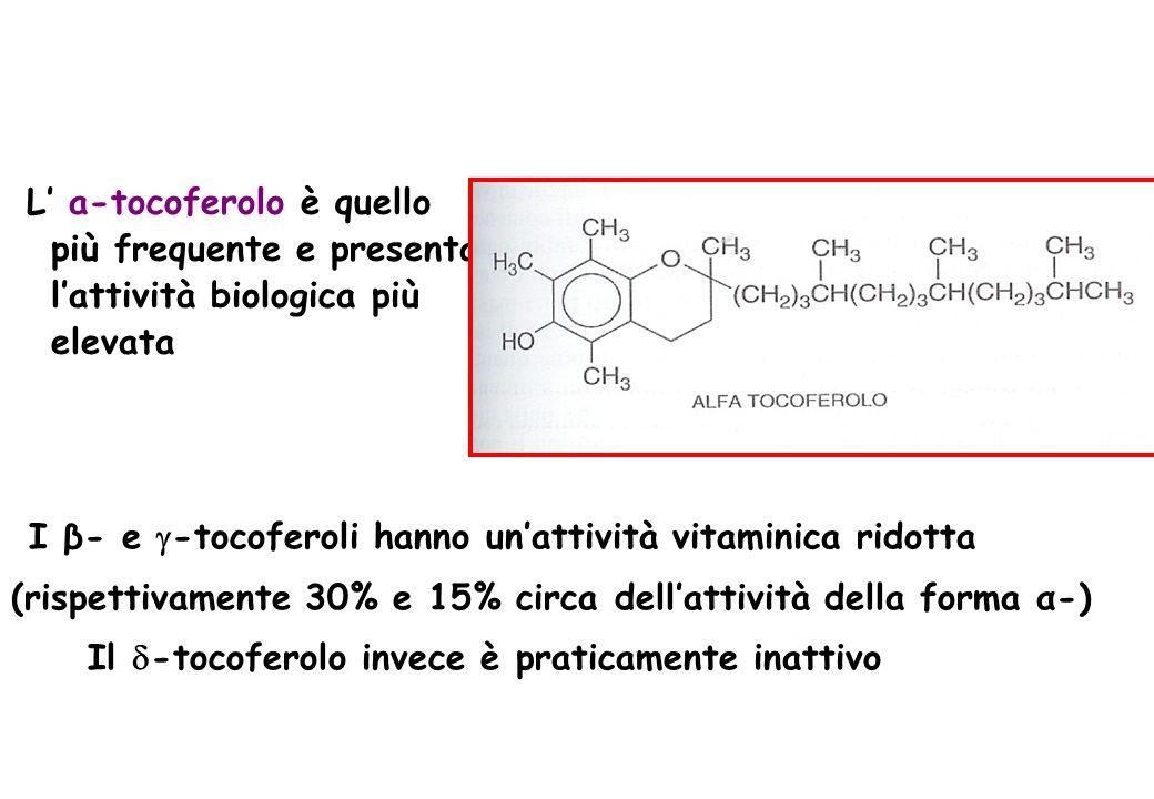 I β- e -tocoferoli hanno un'attività vitaminica ridotta