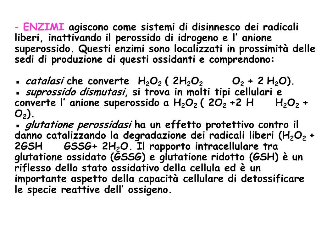ENZIMI agiscono come sistemi di disinnesco dei radicali liberi, inattivando il perossido di idrogeno e l' anione superossido.