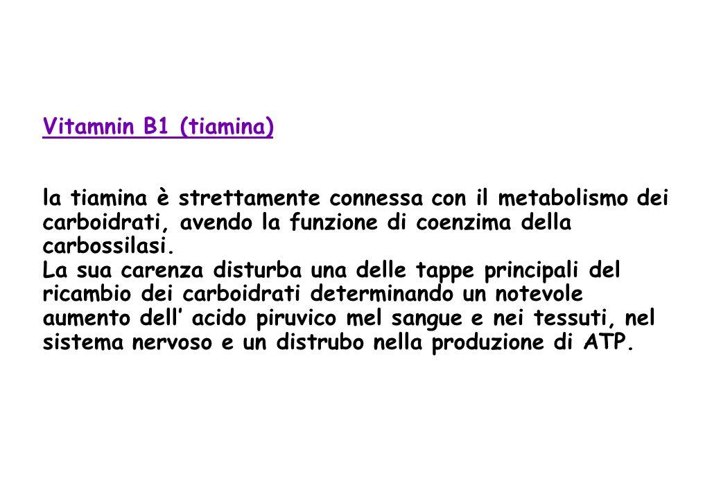 Vitamnin B1 (tiamina) la tiamina è strettamente connessa con il metabolismo dei carboidrati, avendo la funzione di coenzima della carbossilasi.