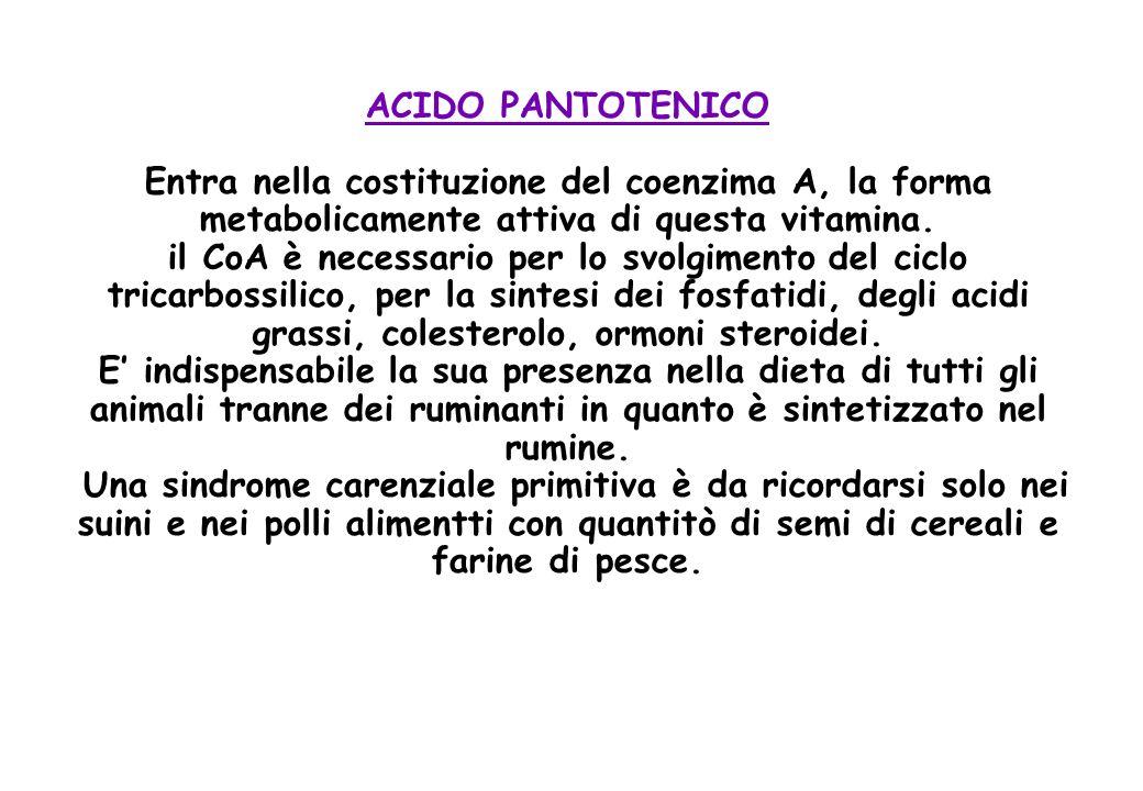 ACIDO PANTOTENICO Entra nella costituzione del coenzima A, la forma metabolicamente attiva di questa vitamina.