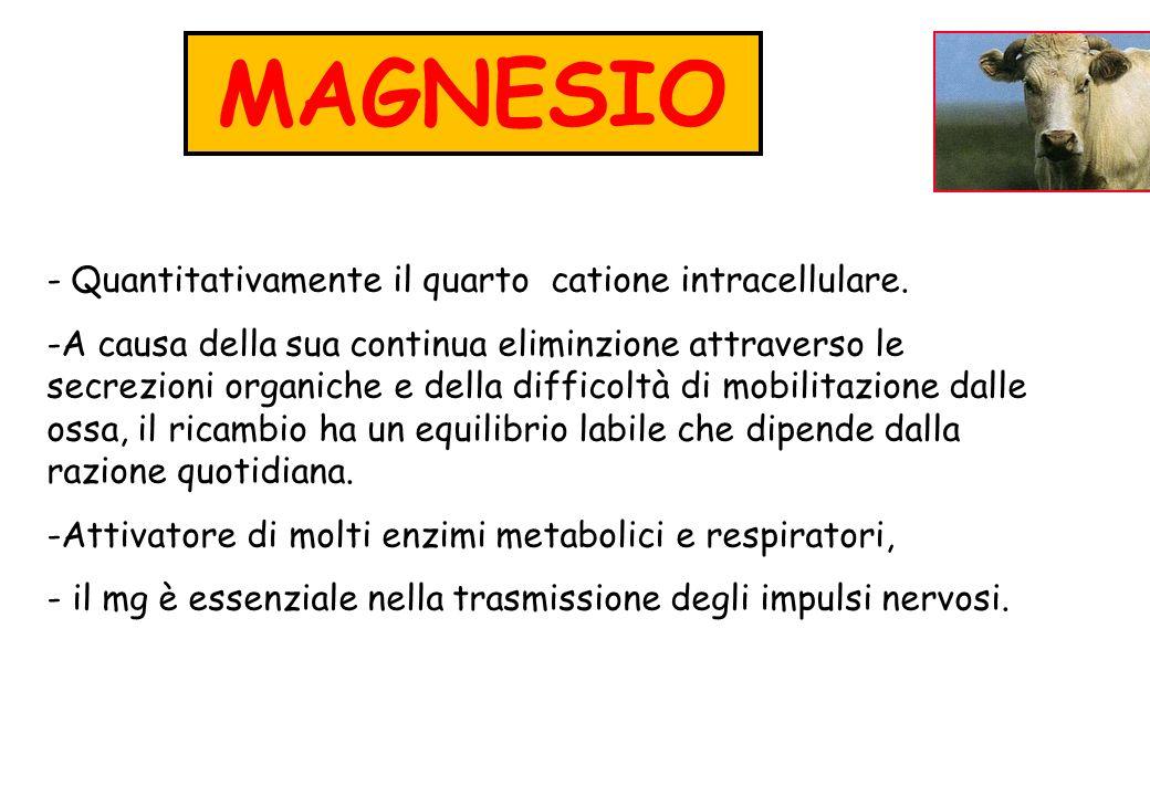 MAGNESIO Quantitativamente il quarto catione intracellulare.