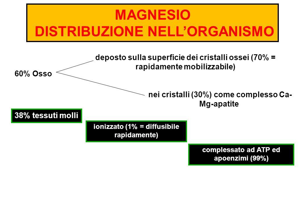 MAGNESIO DISTRIBUZIONE NELL'ORGANISMO