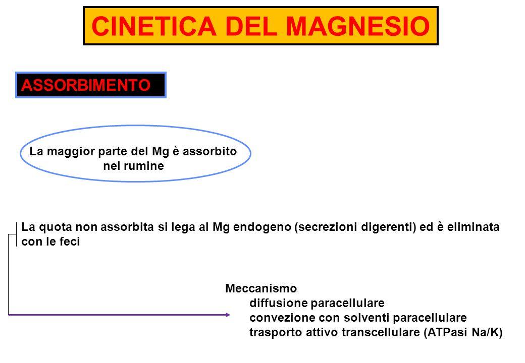La maggior parte del Mg è assorbito nel rumine