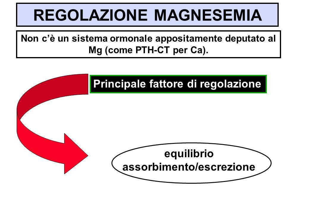 REGOLAZIONE MAGNESEMIA equilibrio assorbimento/escrezione