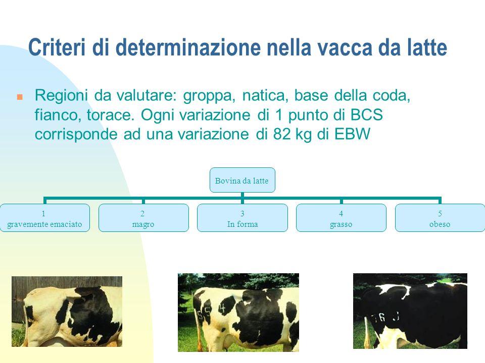 Criteri di determinazione nella vacca da latte
