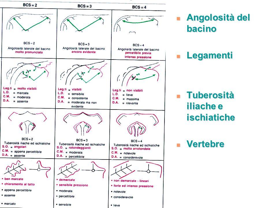 Angolosità del bacino Legamenti Tuberosità iliache e ischiatiche Vertebre