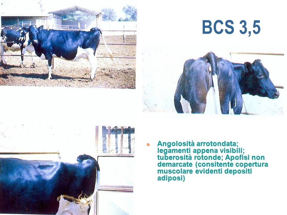 BCS 3,5