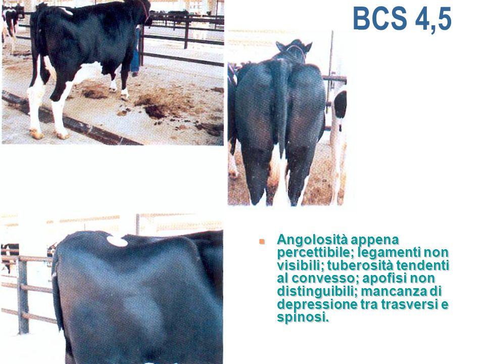 BCS 4,5