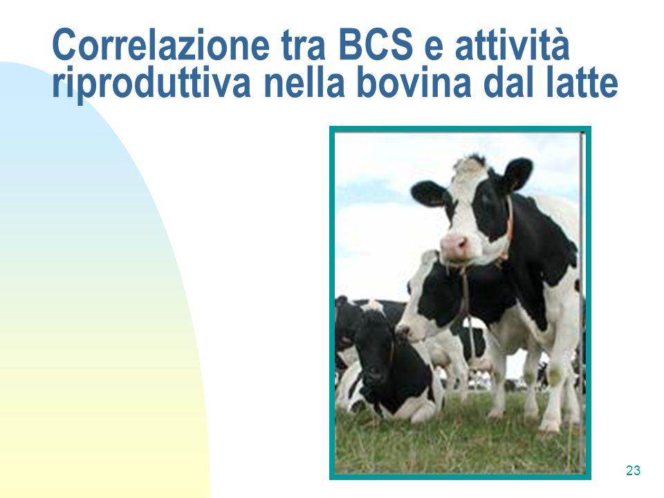 Correlazione tra BCS e attività riproduttiva nella bovina dal latte