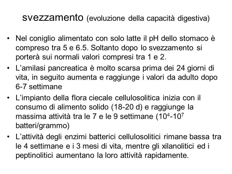 svezzamento (evoluzione della capacità digestiva)