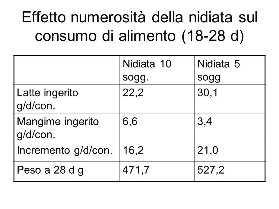 Effetto numerosità della nidiata sul consumo di alimento (18-28 d)