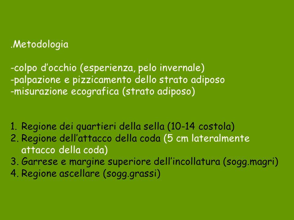 .Metodologia -colpo d'occhio (esperienza, pelo invernale) -palpazione e pizzicamento dello strato adiposo.
