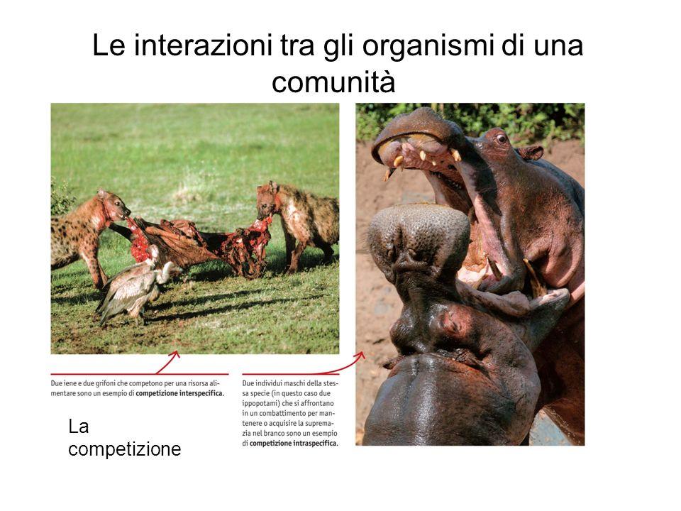 Le interazioni tra gli organismi di una comunità