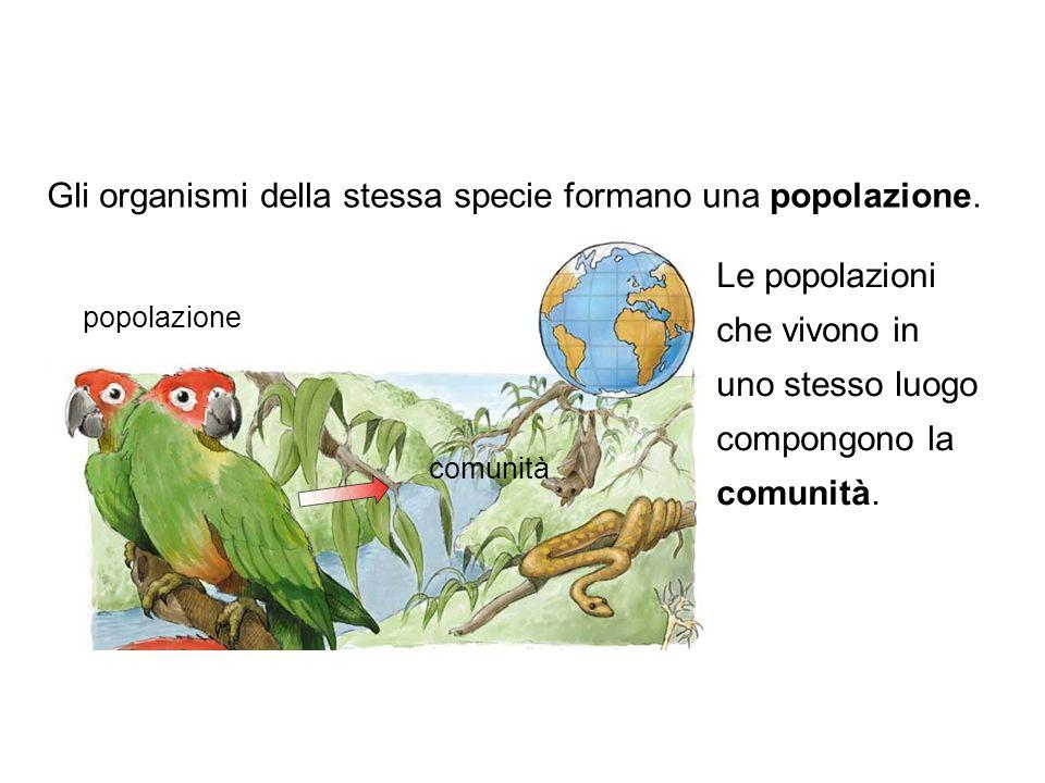 Gli organismi della stessa specie formano una popolazione.