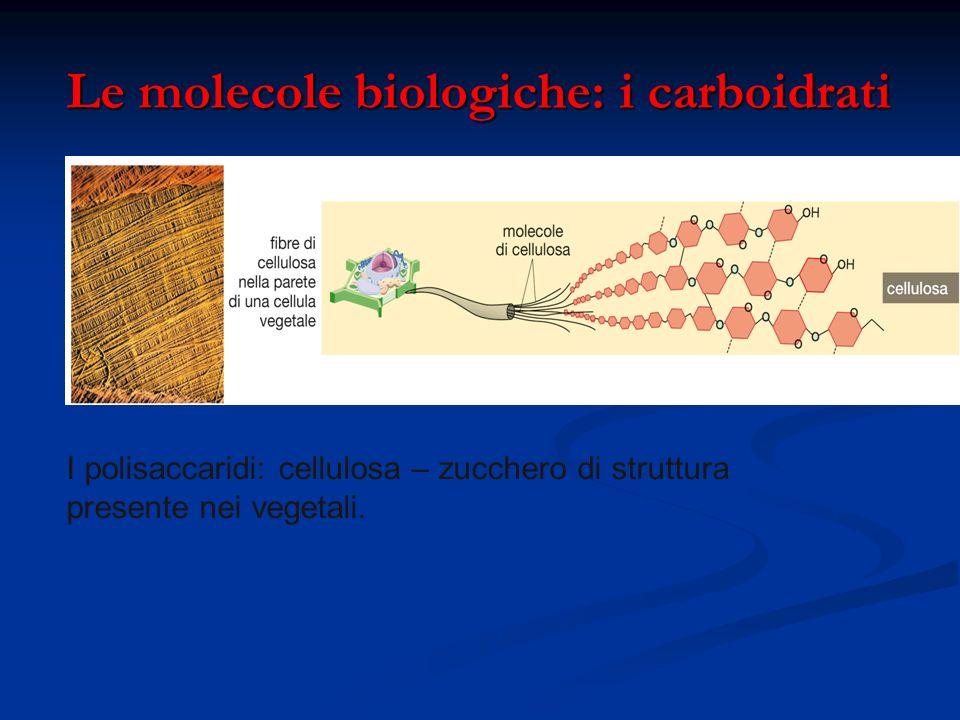 Le molecole biologiche: i carboidrati