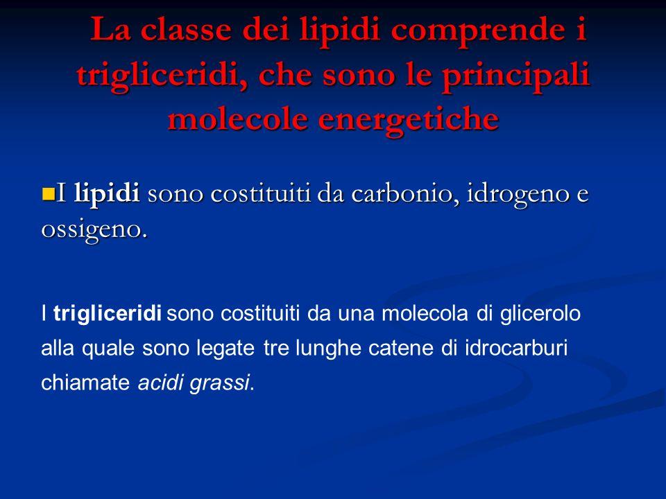 La classe dei lipidi comprende i trigliceridi, che sono le principali molecole energetiche