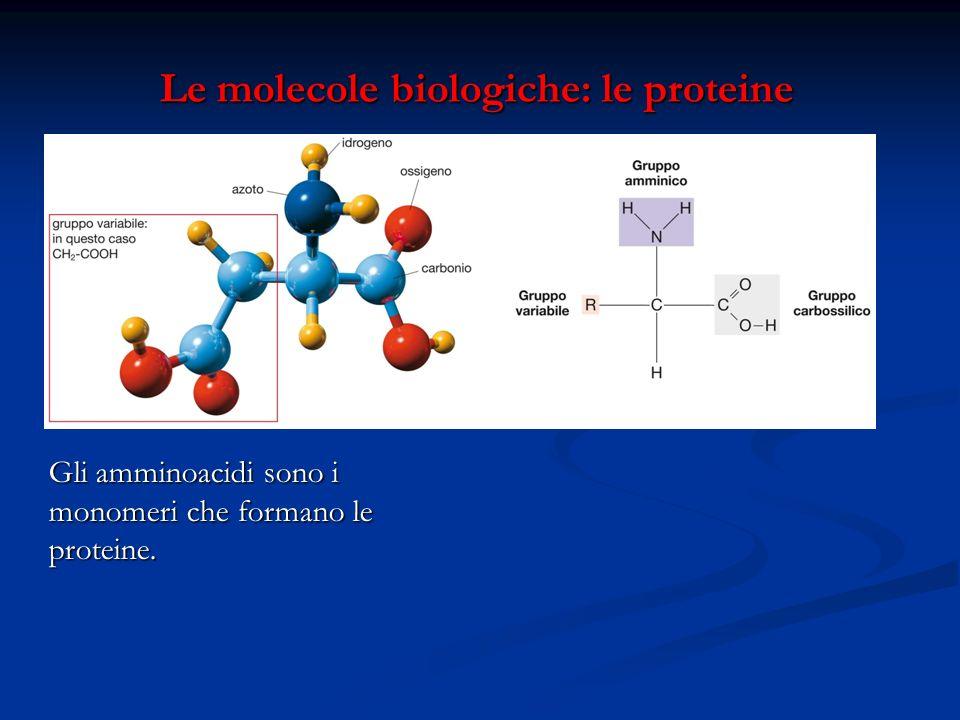 Le molecole biologiche: le proteine