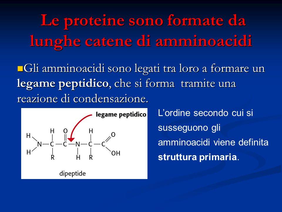 Le proteine sono formate da lunghe catene di amminoacidi