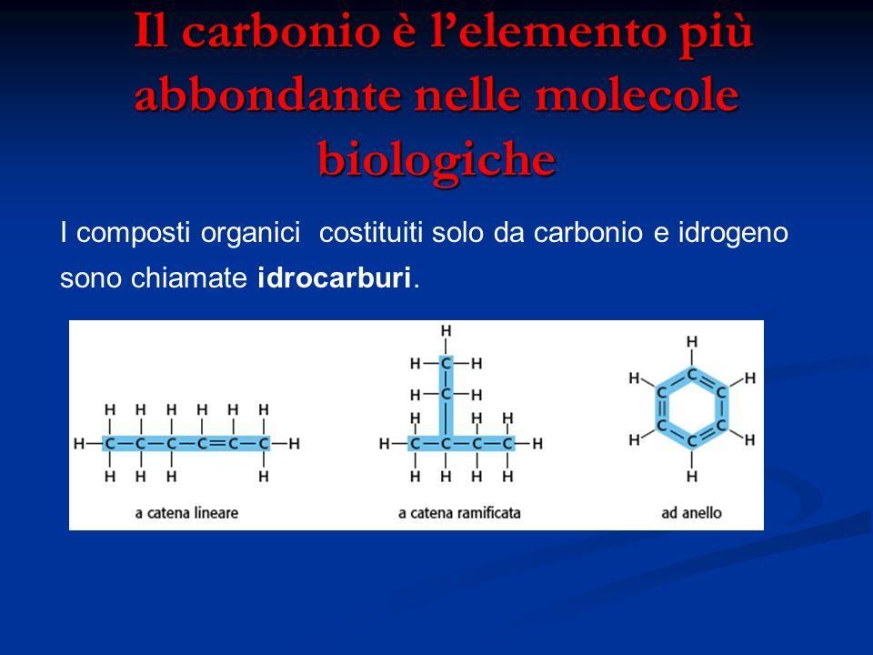 Il carbonio è l'elemento più abbondante nelle molecole biologiche