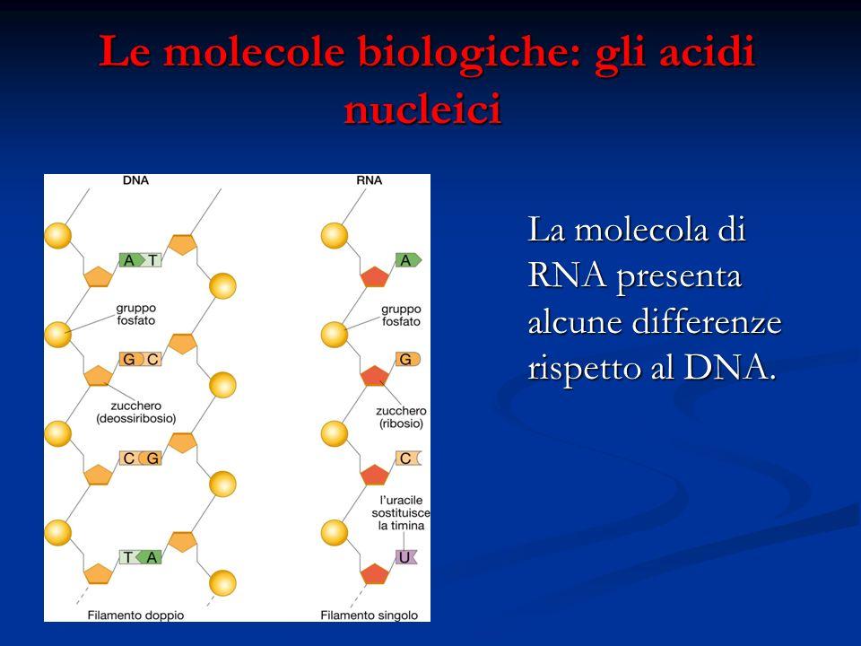 Le molecole biologiche: gli acidi nucleici