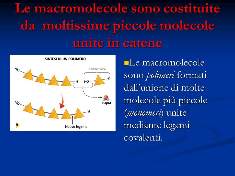 Le macromolecole sono costituite da moltissime piccole molecole unite in catene