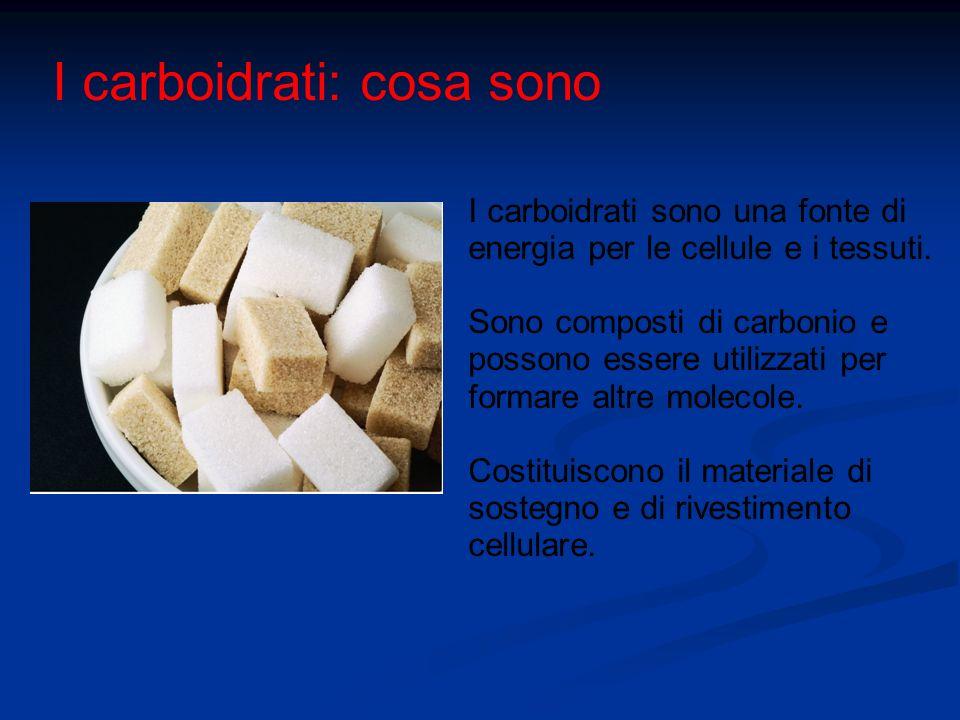 I carboidrati: cosa sono