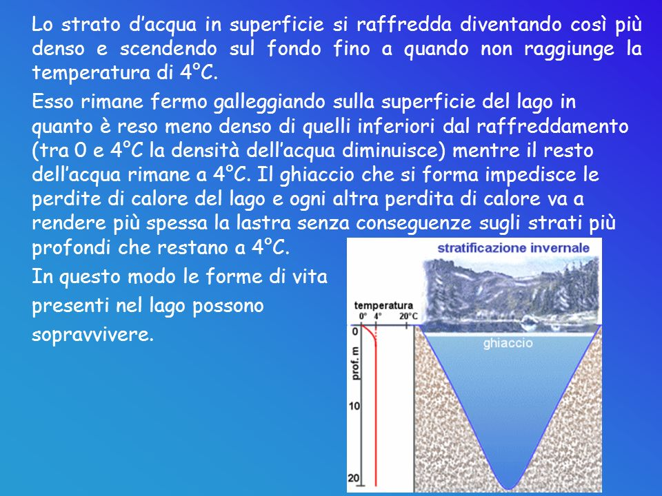 Lo strato d'acqua in superficie si raffredda diventando così più denso e scendendo sul fondo fino a quando non raggiunge la temperatura di 4°C.