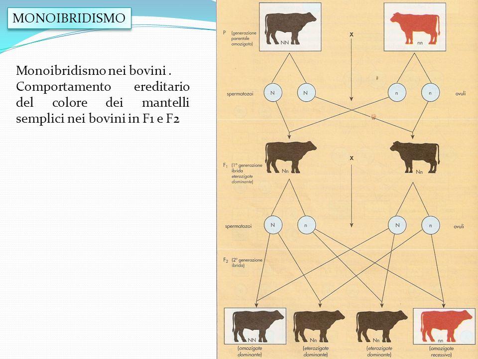 MONOIBRIDISMO Monoibridismo nei bovini .