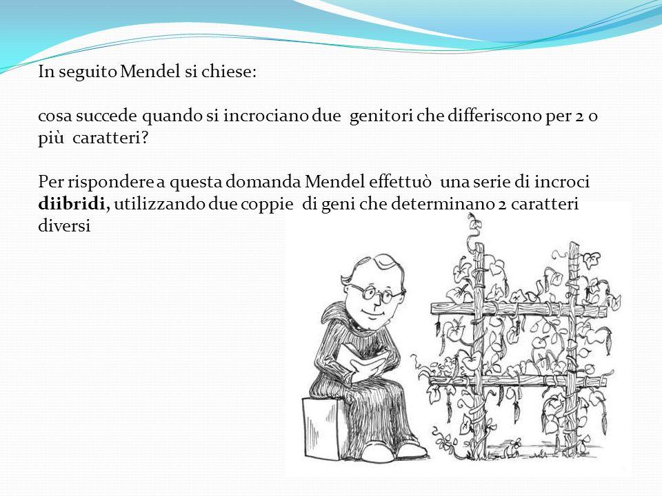 In seguito Mendel si chiese:
