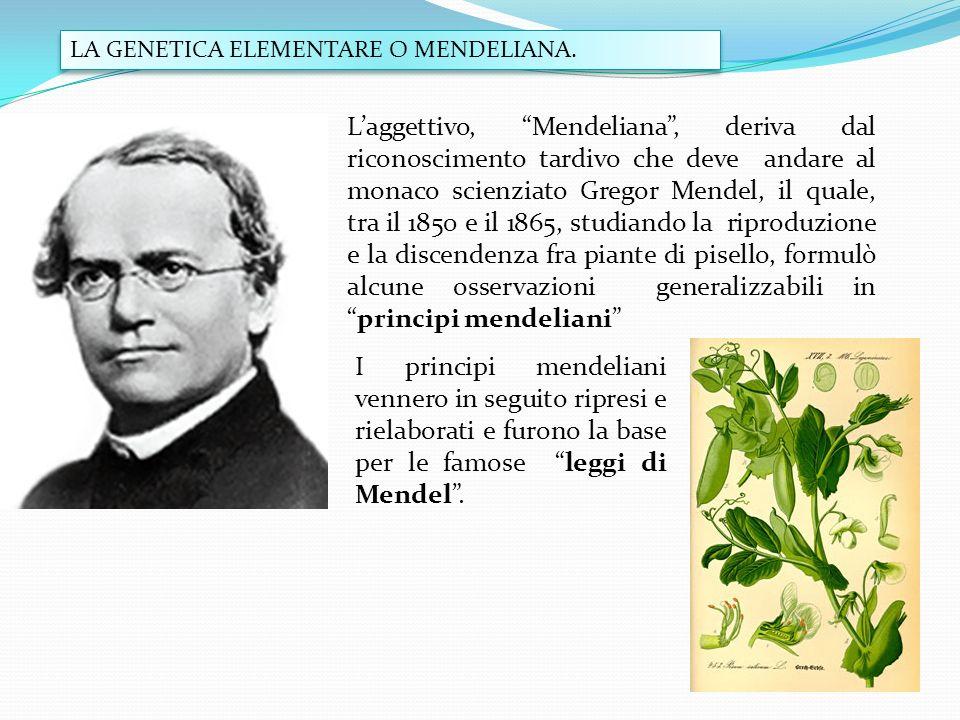 LA GENETICA ELEMENTARE O MENDELIANA.