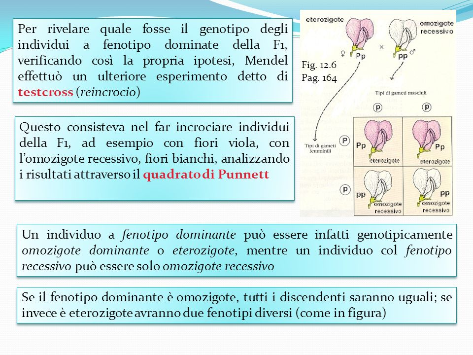 Fig. 12.6 Pag. 164.