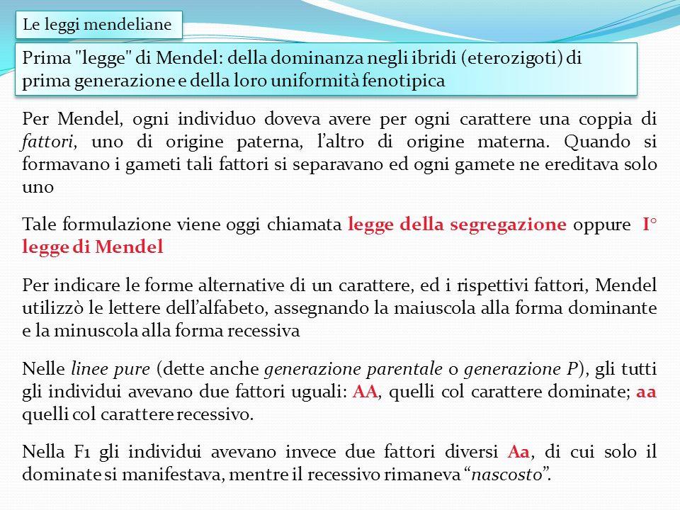 Le leggi mendelianePrima legge di Mendel: della dominanza negli ibridi (eterozigoti) di prima generazione e della loro uniformità fenotipica.