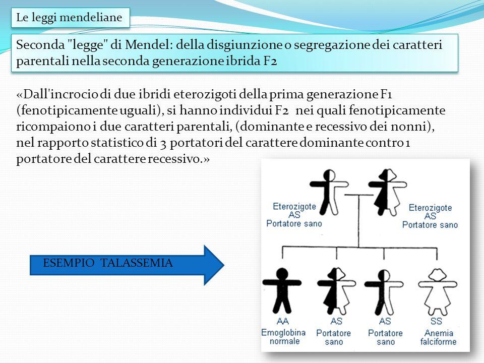 Le leggi mendeliane Seconda legge di Mendel: della disgiunzione o segregazione dei caratteri parentali nella seconda generazione ibrida F2.
