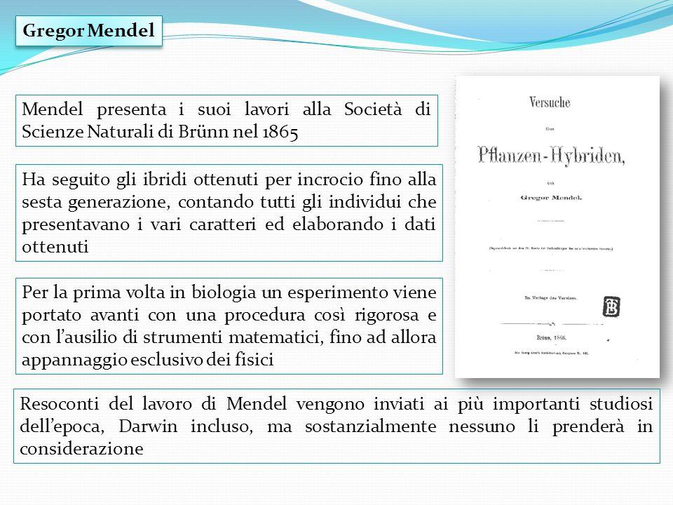 Gregor Mendel Mendel presenta i suoi lavori alla Società di Scienze Naturali di Brünn nel 1865.