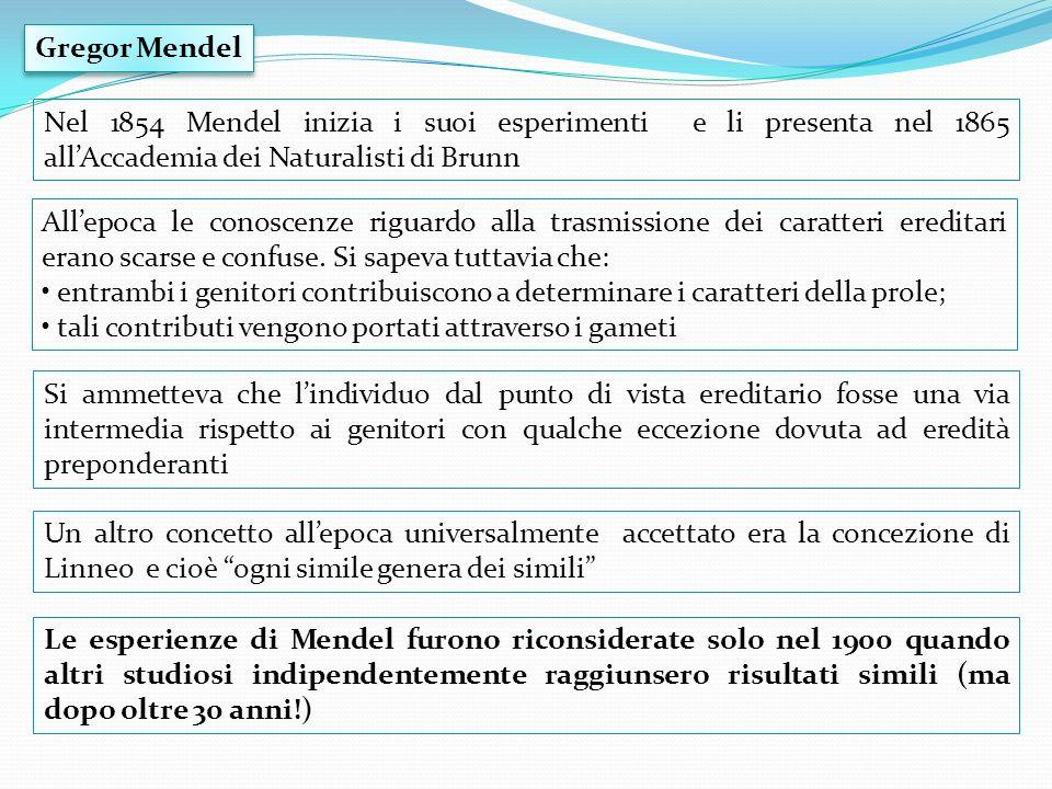 Gregor MendelNel 1854 Mendel inizia i suoi esperimenti e li presenta nel 1865 all'Accademia dei Naturalisti di Brunn.