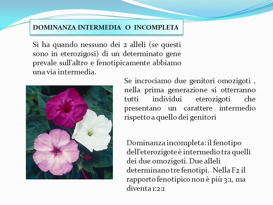 DOMINANZA INTERMEDIA O INCOMPLETA
