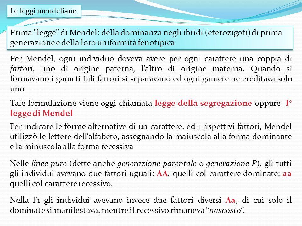 Le leggi mendeliane Prima legge di Mendel: della dominanza negli ibridi (eterozigoti) di prima generazione e della loro uniformità fenotipica.