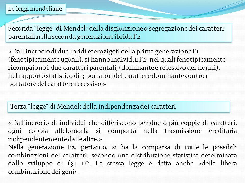 Terza legge di Mendel: della indipendenza dei caratteri